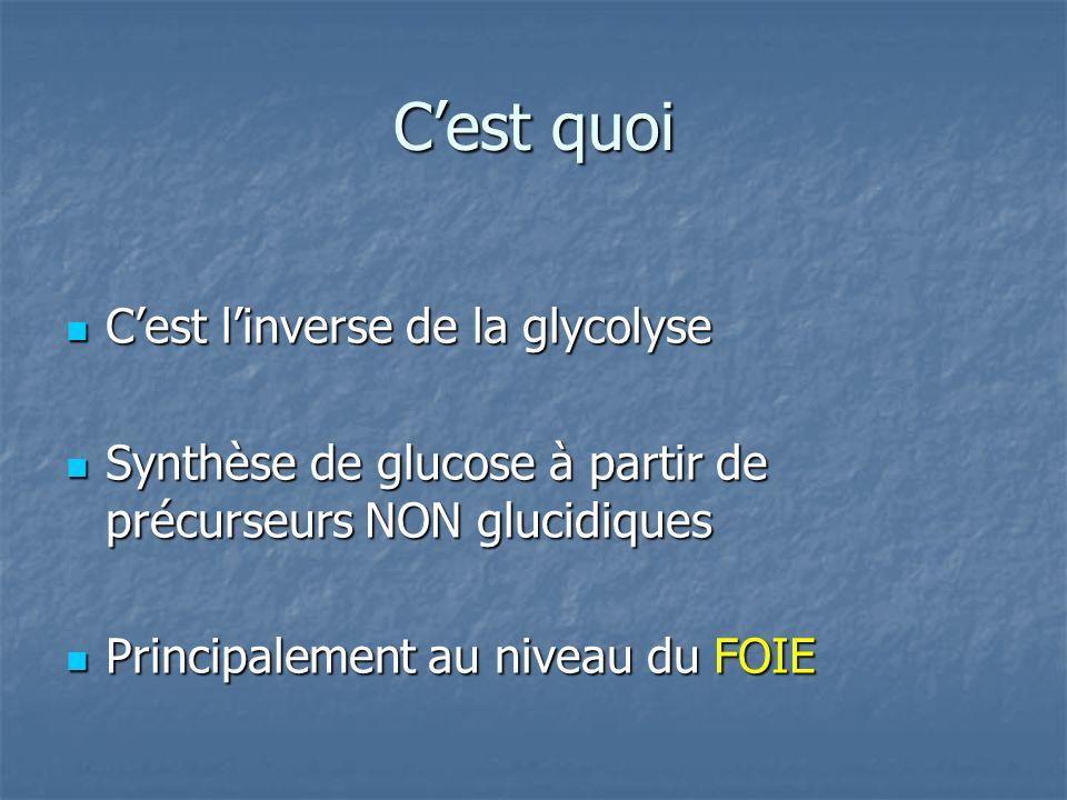 Cest linverse de la glycolyse Cest linverse de la glycolyse Synthèse de glucose à partir de précurseurs NON glucidiques Synthèse de glucose à partir de précurseurs NON glucidiques Principalement au niveau du FOIE Principalement au niveau du FOIE Cest quoi