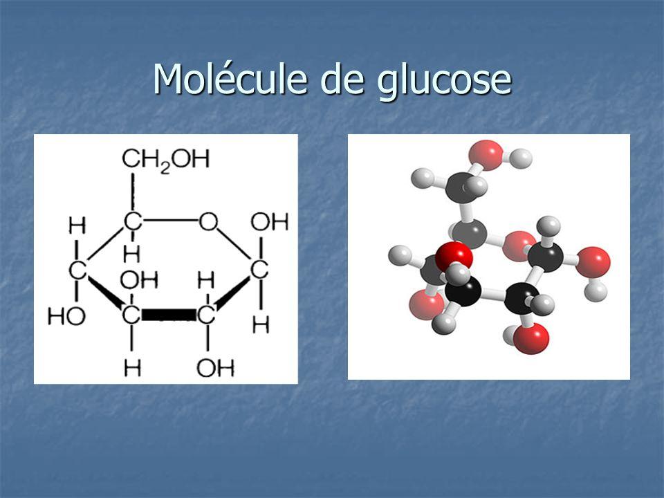 sucres simples = oses = monosaccharides absorbés sans digestion (sucres « rapides ») Glucose Galactose Fructose Ribose, désoxyribose = composant des acides nucléiques (ADN) et de lATP (énergie)