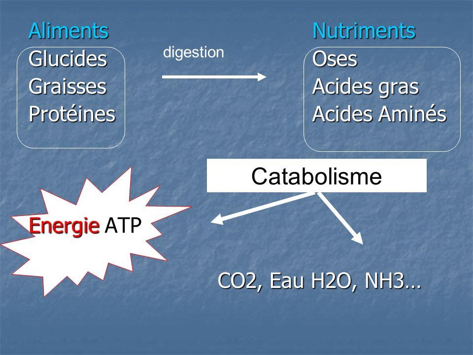 Catabolisme AlimentsNutriments GlucidesOses GraissesAcides gras ProtéinesAcides Aminés Energie ATP CO2, Eau H2O, NH3… digestion