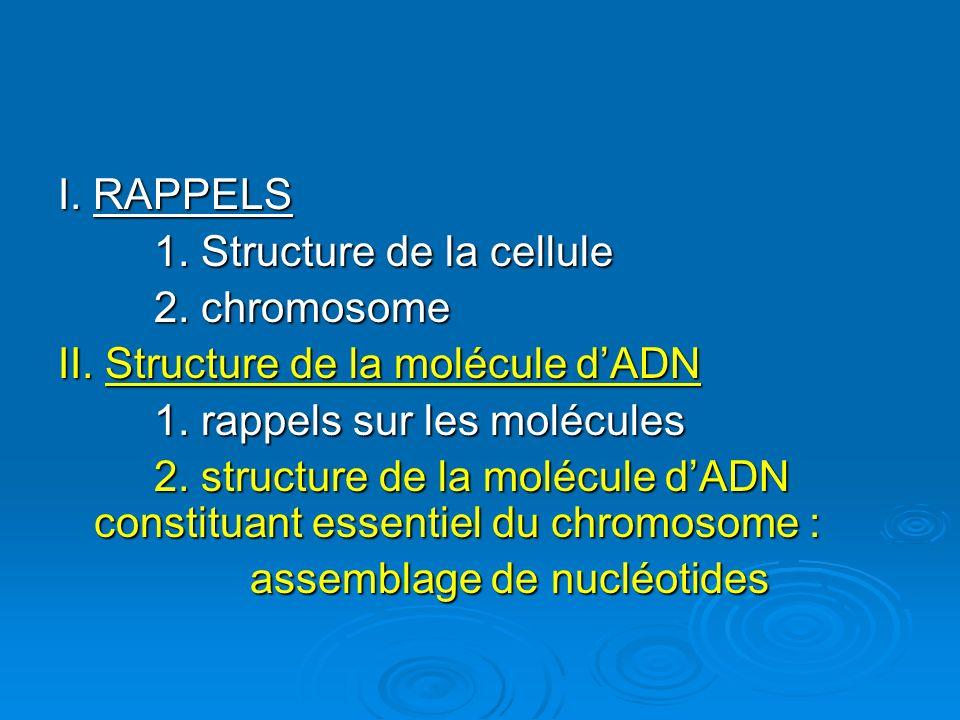I. RAPPELS 1. Structure de la cellule 2. chromosome II. Structure de la molécule dADN 1. rappels sur les molécules 2. structure de la molécule dADN co