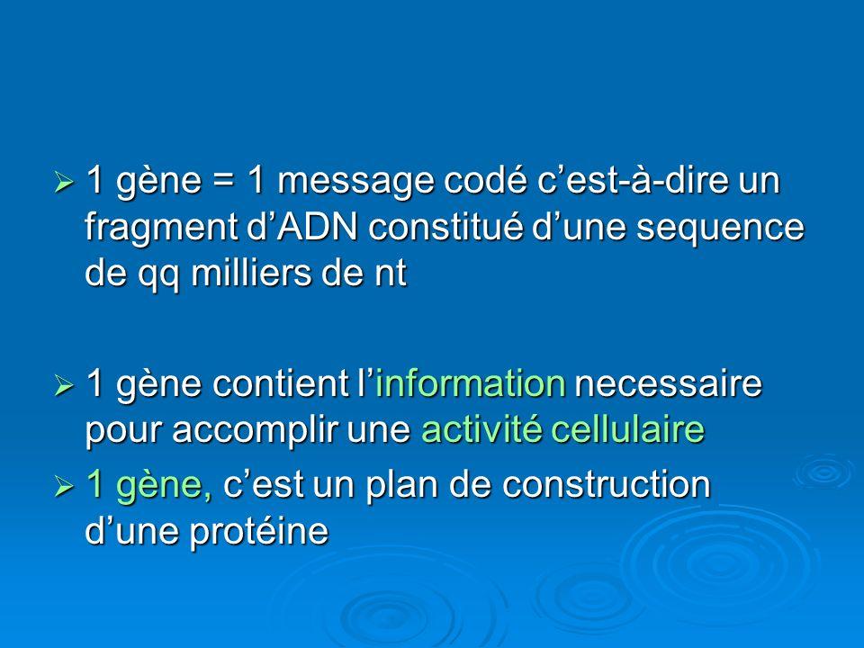 1 gène = 1 message codé cest-à-dire un fragment dADN constitué dune sequence de qq milliers de nt 1 gène = 1 message codé cest-à-dire un fragment dADN