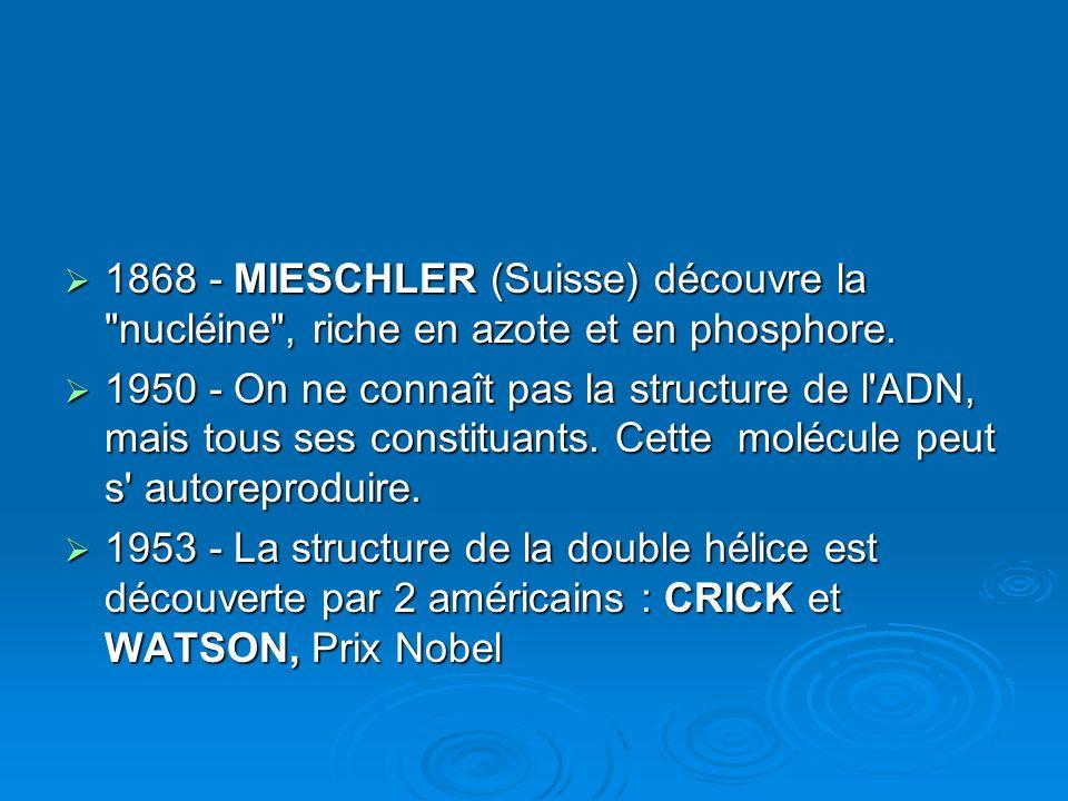 1868 - MIESCHLER (Suisse) découvre la