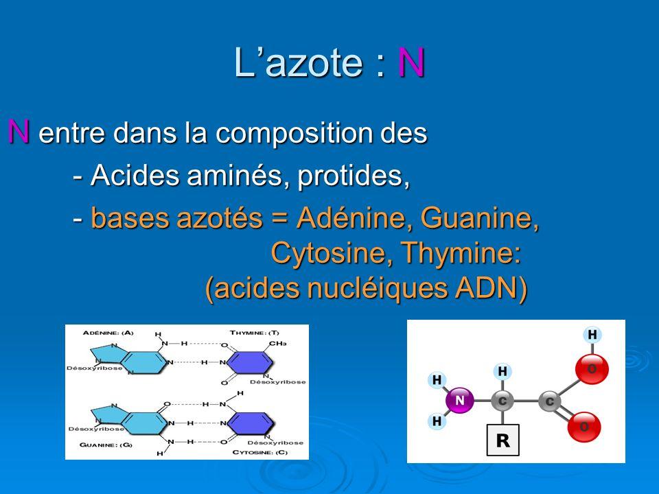 Lazote : N N entre dans la composition des - Acides aminés, protides, - bases azotés = Adénine, Guanine, Cytosine, Thymine: (acides nucléiques ADN)