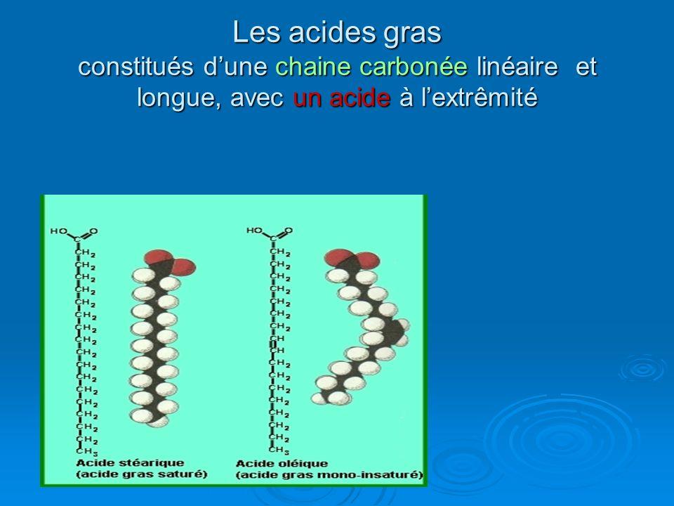 Les acides gras constitués dune chaine carbonée linéaire et longue, avec un acide à lextrêmité
