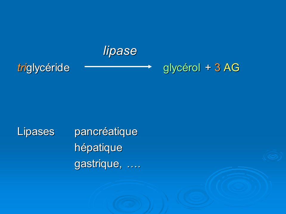 lipase triglycéride glycérol + 3 AG Lipasespancréatique hépatique gastrique, ….
