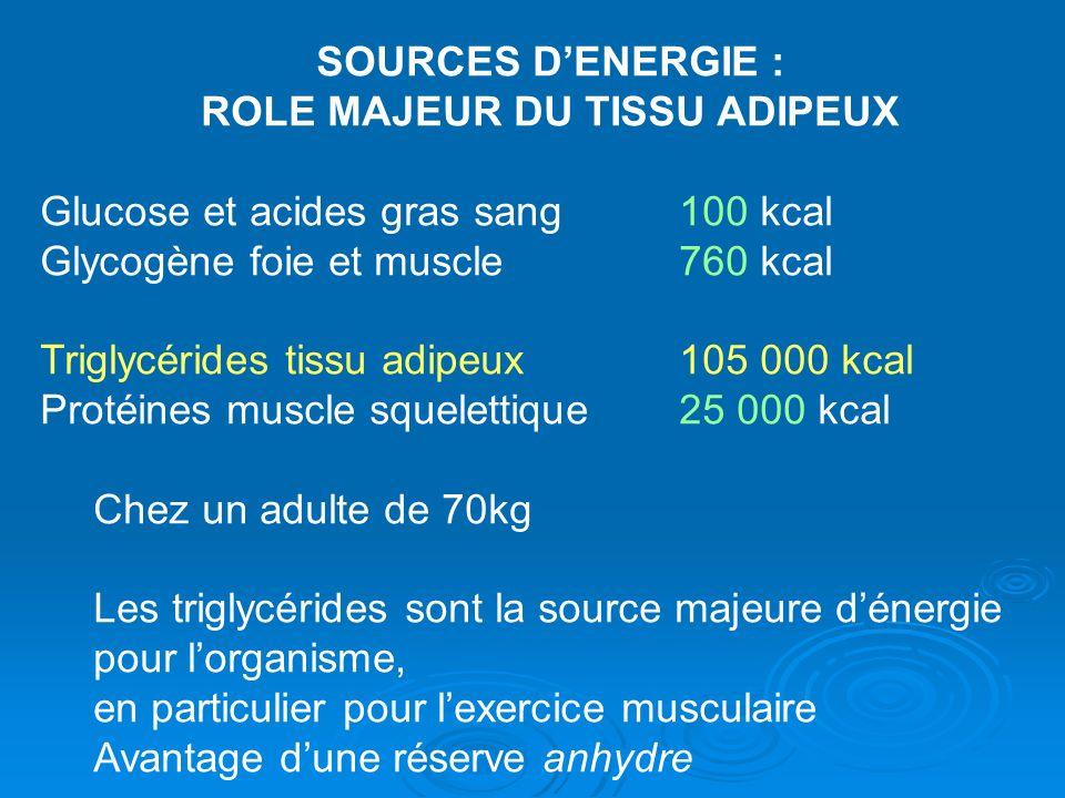 SOURCES DENERGIE : ROLE MAJEUR DU TISSU ADIPEUX Glucose et acides gras sang 100 kcal Glycogène foie et muscle760 kcal Triglycérides tissu adipeux105 0