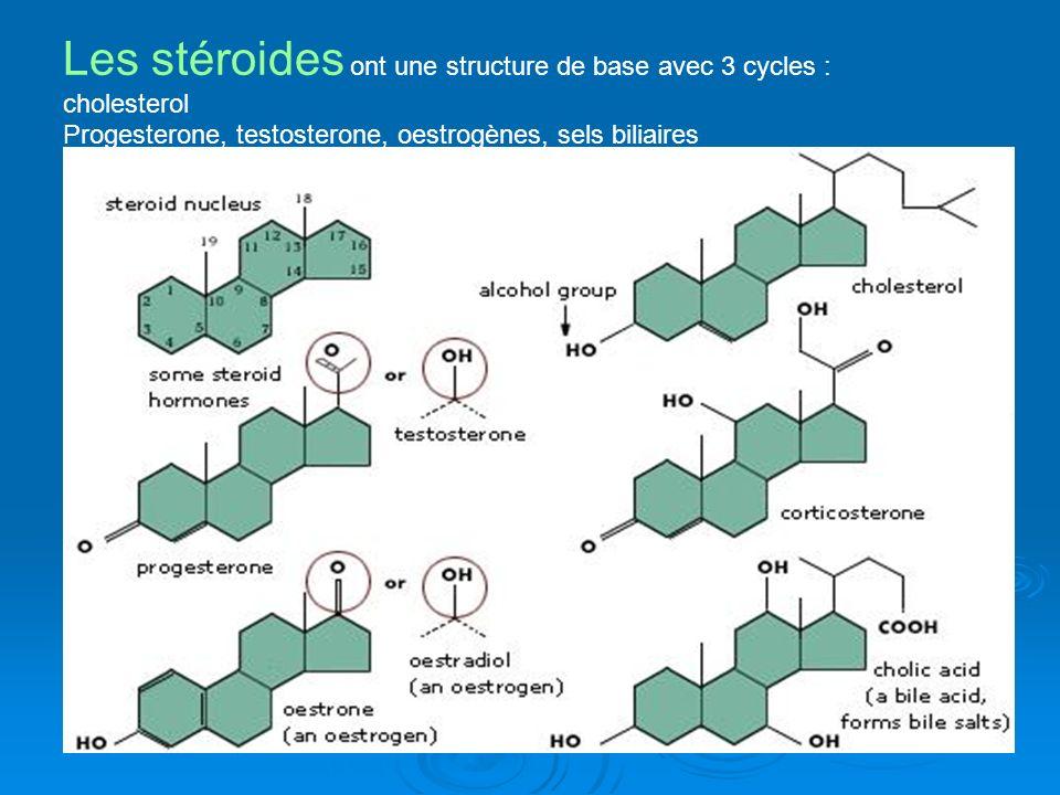 Les stéroides ont une structure de base avec 3 cycles : cholesterol Progesterone, testosterone, oestrogènes, sels biliaires