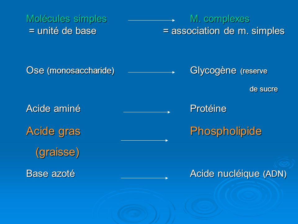 Molécules simplesM. complexes = unité de base = association de m. simples = unité de base = association de m. simples Ose (monosaccharide) Glycogène (