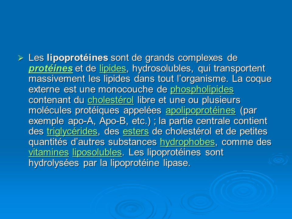 Les lipoprotéines sont de grands complexes de protéines et de lipides, hydrosolubles, qui transportent massivement les lipides dans tout lorganisme. L