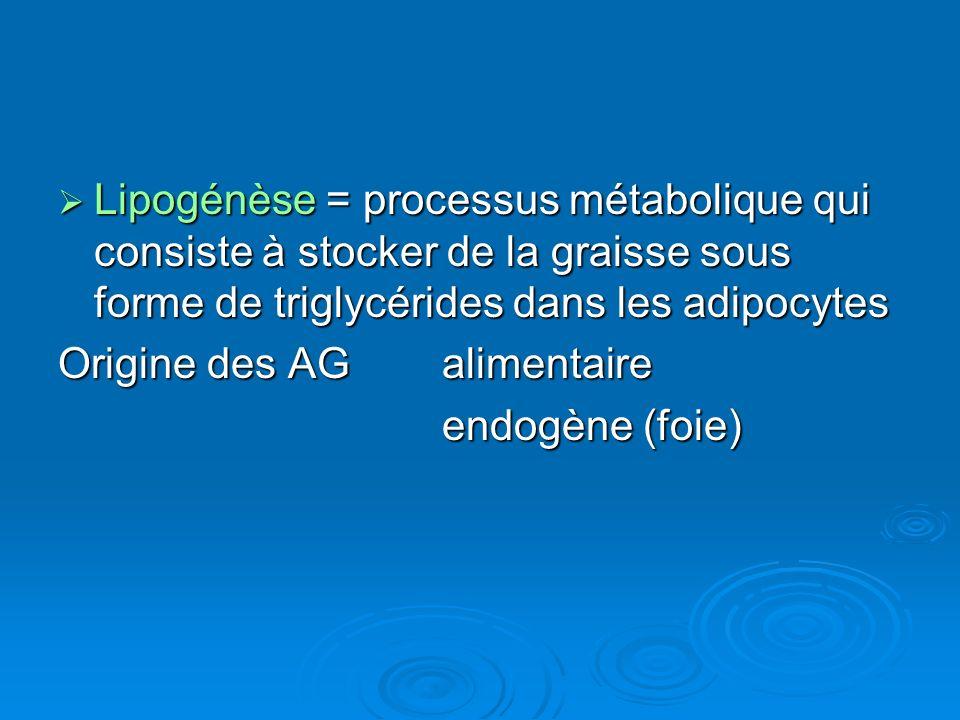 Lipogénèse = processus métabolique qui consiste à stocker de la graisse sous forme de triglycérides dans les adipocytes Lipogénèse = processus métabol