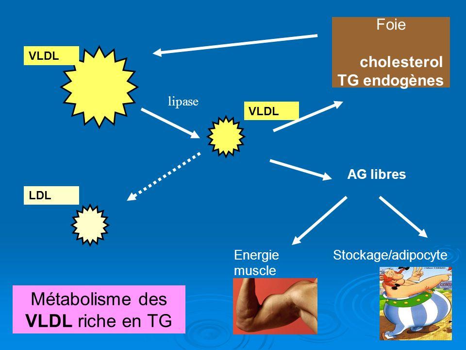 chylom icron VLDL TG lipase AG libres Energie muscle Stockage/adipocyte Foie cholesterol TG endogènes VLDL LDL Métabolisme des VLDL riche en TG