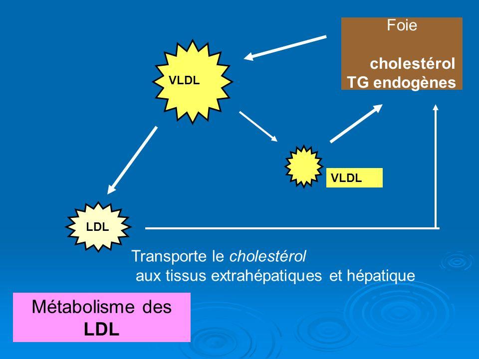 chylom icron VLDL Foie cholestérol TG endogènes VLDL Métabolisme des LDL LDL Transporte le cholestérol aux tissus extrahépatiques et hépatique