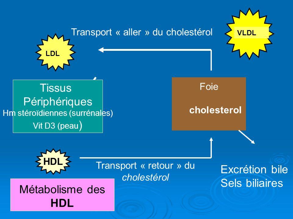 VLDL Foie cholesterol Métabolisme des HDL LDL Transport « retour » du cholestérol Tissus Périphériques Hm stéroïdiennes (surrénales) Vit D3 (peau ) Tr