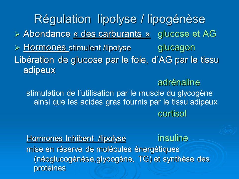 Régulation lipolyse / lipogénèse Abondance « des carburants » glucose et AG Abondance « des carburants » glucose et AG Hormones stimulent /lipolyse gl