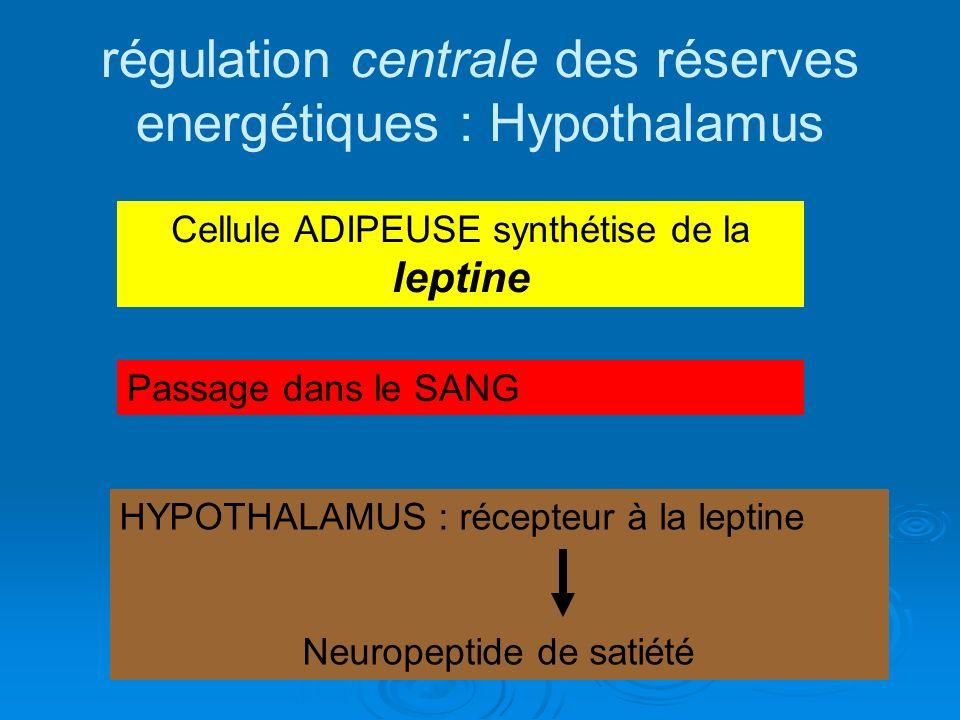 régulation centrale des réserves energétiques : Hypothalamus Cellule ADIPEUSE synthétise de la leptine Passage dans le SANG HYPOTHALAMUS : récepteur à
