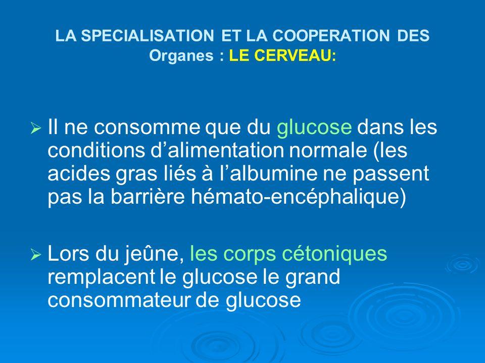 LA SPECIALISATION ET LA COOPERATION DES Organes : LE CERVEAU: Il ne consomme que du glucose dans les conditions dalimentation normale (les acides gras