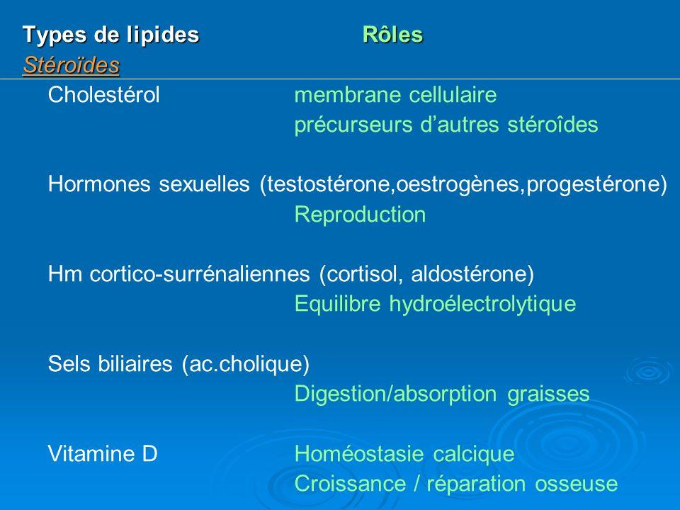 Types de lipidesRôles Stéroïdes Cholestérolmembrane cellulaire précurseurs dautres stéroîdes Hormones sexuelles (testostérone,oestrogènes,progestérone