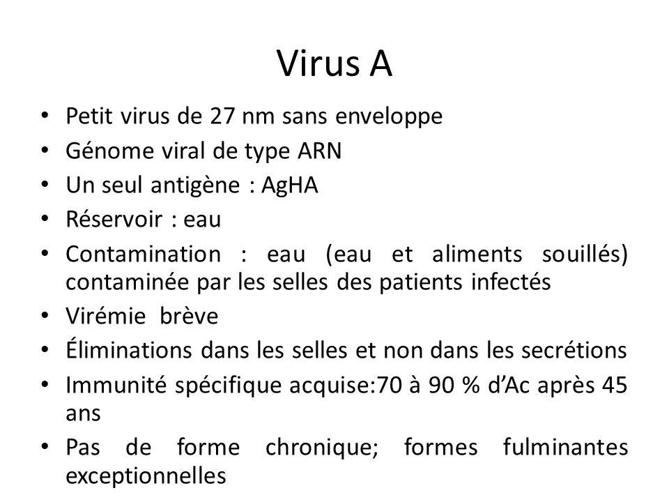 Virus A Petit virus de 27 nm sans enveloppe Génome viral de type ARN Un seul antigène : AgHA Réservoir : eau Contamination : eau (eau et aliments soui