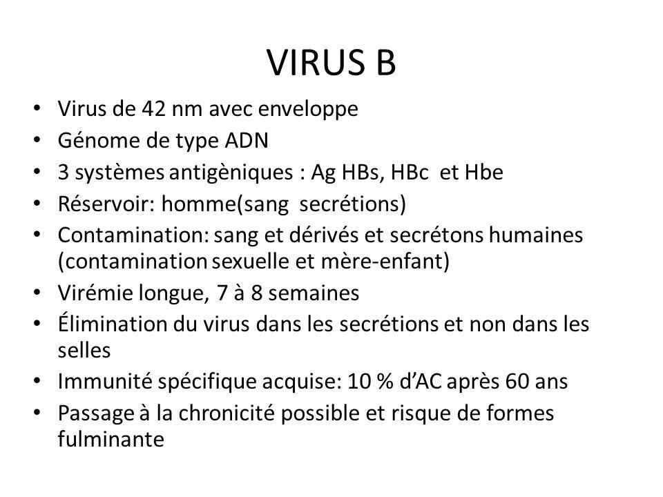 VIRUS B Virus de 42 nm avec enveloppe Génome de type ADN 3 systèmes antigèniques : Ag HBs, HBc et Hbe Réservoir: homme(sang secrétions) Contamination: