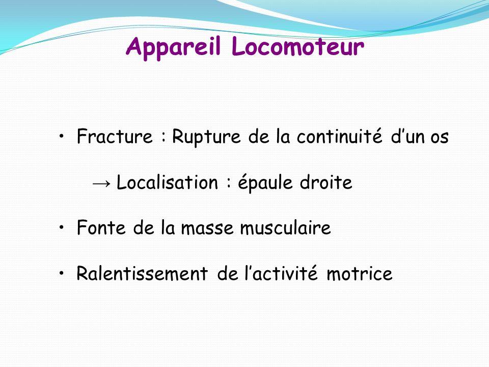 Appareil Locomoteur Fracture : Rupture de la continuité dun os Localisation : épaule droite Fonte de la masse musculaire Ralentissement de lactivité motrice
