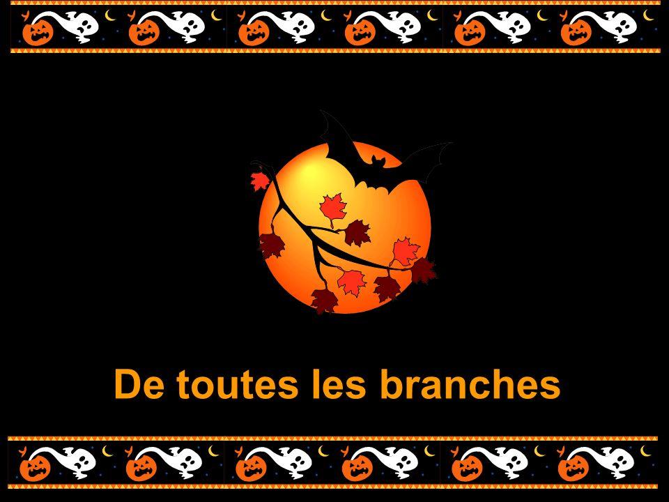 De toutes les branches
