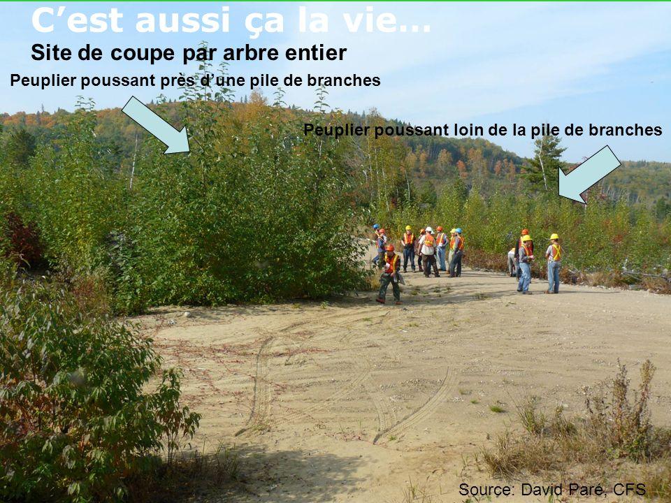 Cest aussi ça la vie… Peuplier poussant près dune pile de branches Peuplier poussant loin de la pile de branches Site de coupe par arbre entier Source