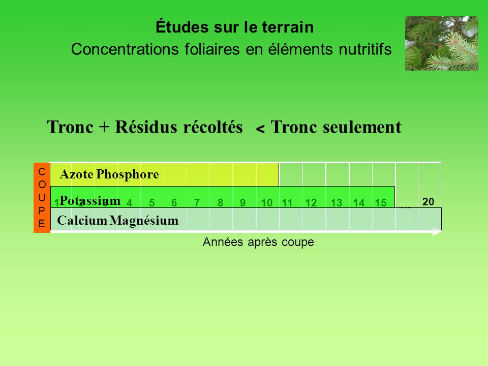 Concentrations foliaires en éléments nutritifs Années après coupe 123456789101112131415 20 COUPECOUPE … Calcium Magnésium Azote Phosphore Potassium Ét