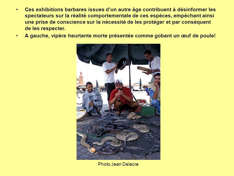 Ces exhibitions barbares issues dun autre âge contribuent à désinformer les spectateurs sur la réalité comportementale de ces espèces, empêchant ainsi
