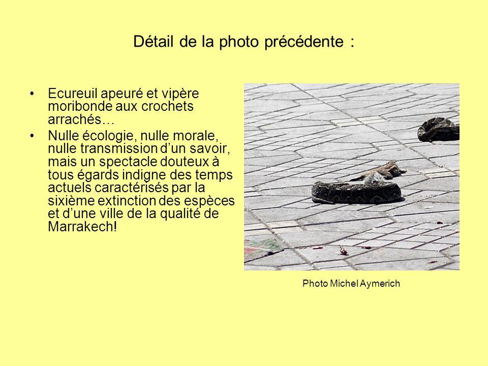 Détail de la photo précédente : Ecureuil apeuré et vipère moribonde aux crochets arrachés… Nulle écologie, nulle morale, nulle transmission dun savoir