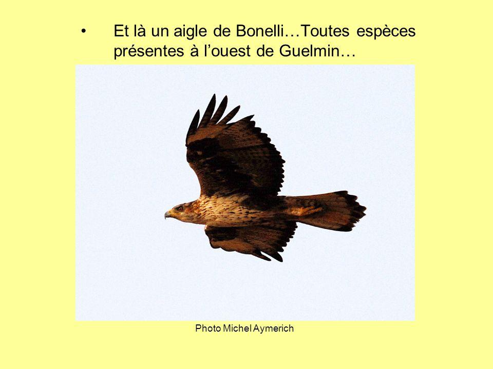 Et là un aigle de Bonelli…Toutes espèces présentes à louest de Guelmin… Photo Michel Aymerich