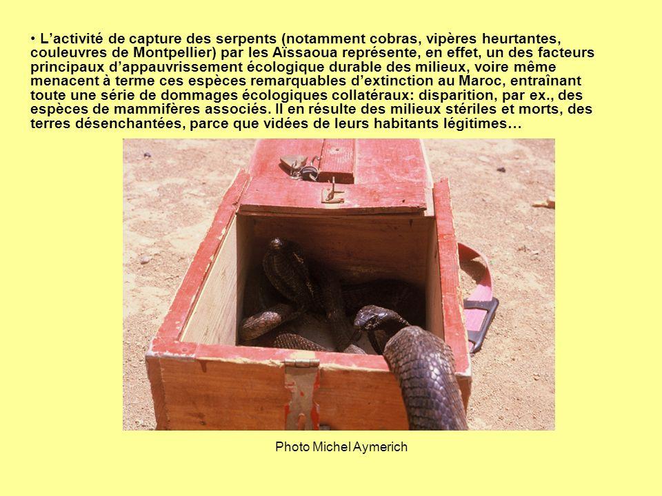 Lactivité de capture des serpents (notamment cobras, vipères heurtantes, couleuvres de Montpellier) par les Aïssaoua représente, en effet, un des fact