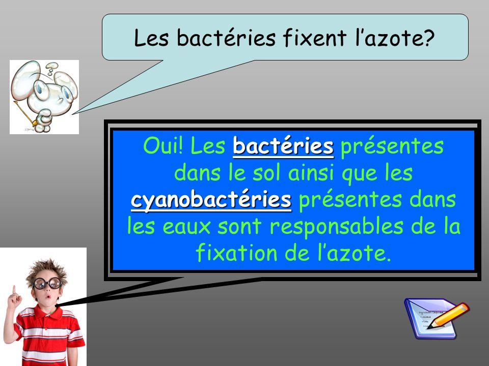 Les bactéries fixent lazote? bactéries cyanobactéries Oui! Les bactéries présentes dans le sol ainsi que les cyanobactéries présentes dans les eaux so