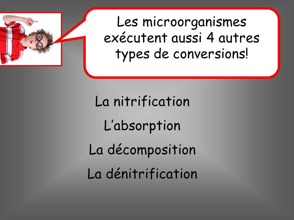 La nitrification Labsorption La décomposition La dénitrification Les microorganismes exécutent aussi 4 autres types de conversions!