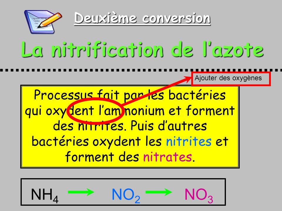 Deuxième conversion La nitrification de lazote Processus fait par les bactéries qui oxydent lammonium et forment des nitrites. Puis dautres bactéries