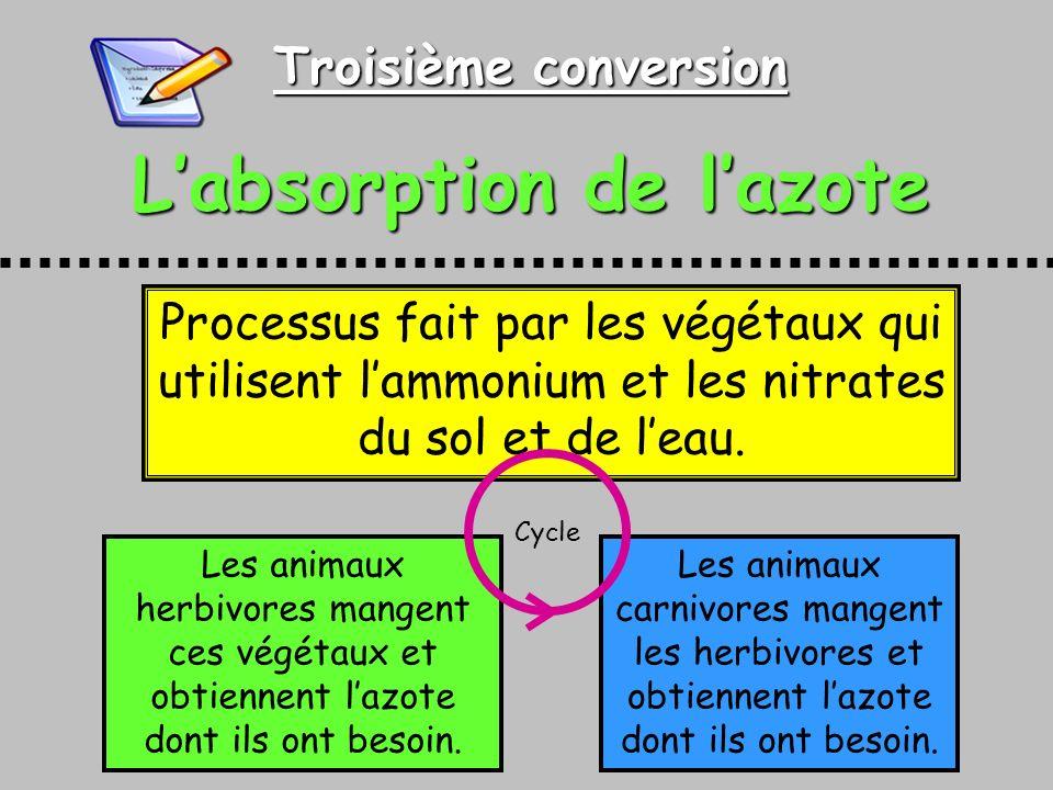 Troisième conversion Labsorption de lazote Processus fait par les végétaux qui utilisent lammonium et les nitrates du sol et de leau.