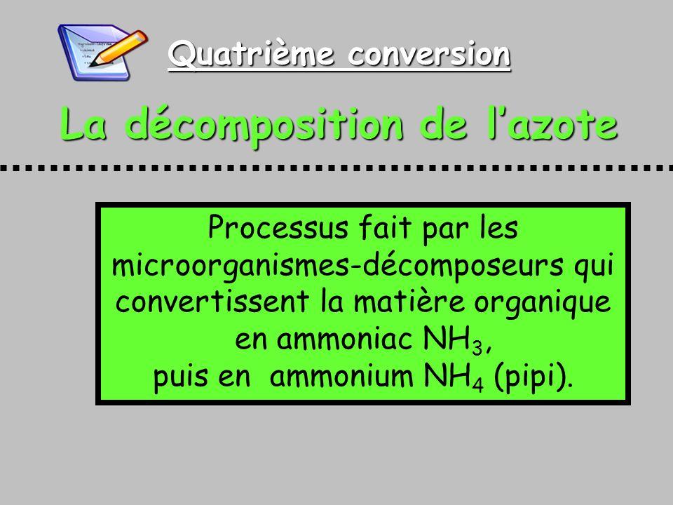 Quatrième conversion La décomposition de lazote Processus fait par les microorganismes-décomposeurs qui convertissent la matière organique en ammoniac NH 3, puis en ammonium NH 4 (pipi).