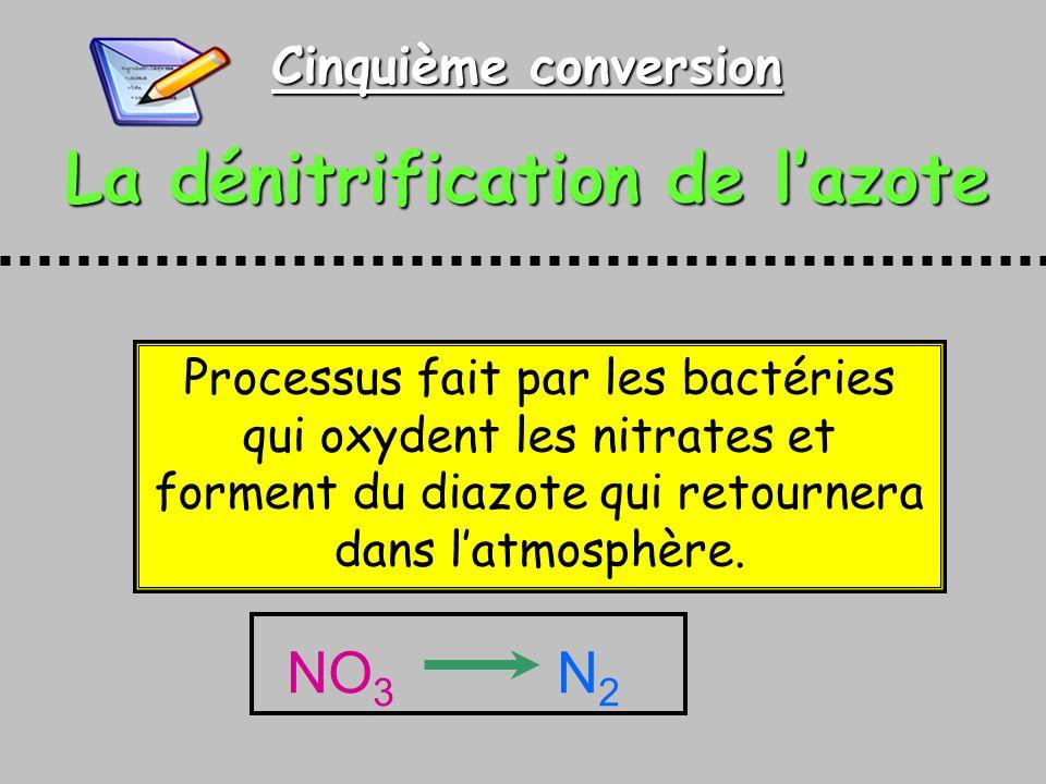 Cinquième conversion La dénitrification de lazote Processus fait par les bactéries qui oxydent les nitrates et forment du diazote qui retournera dans latmosphère.