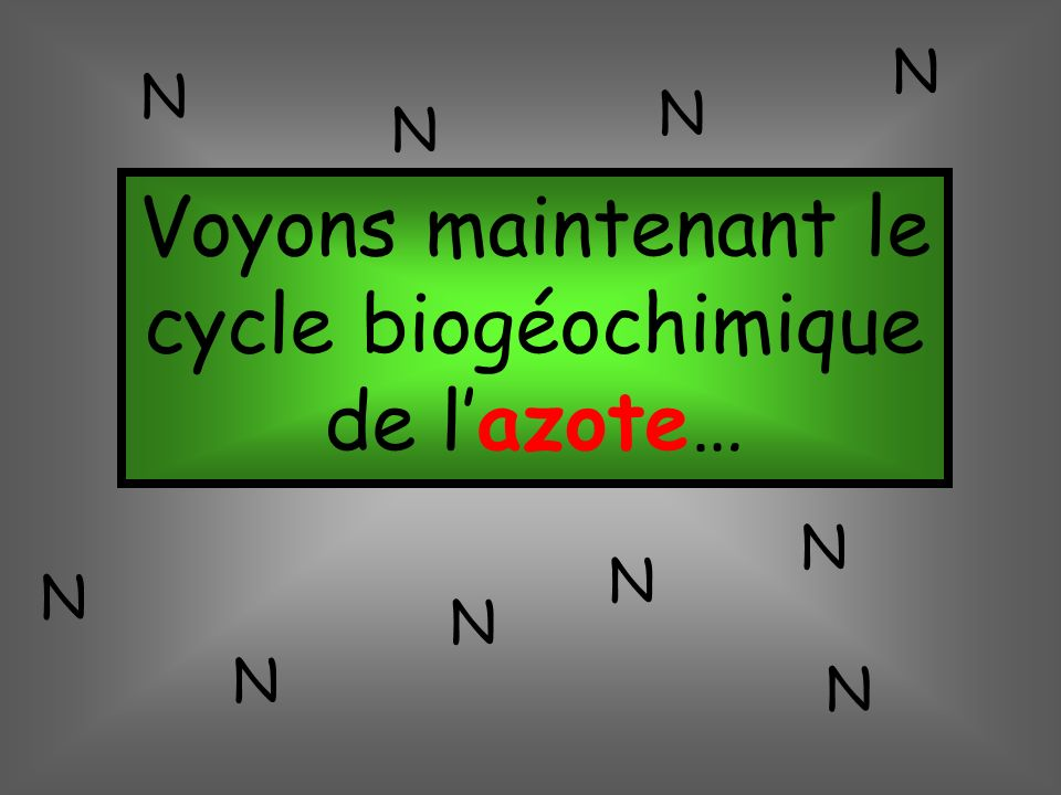 Voyons maintenant le cycle biogéochimique de lazote… N N N N N N N N N N