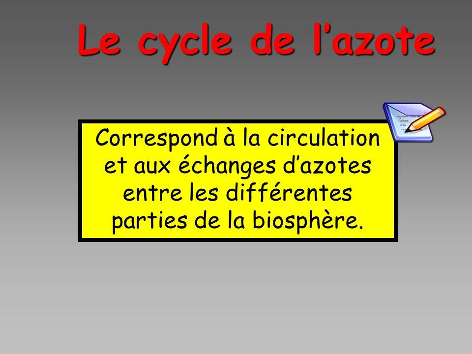 Correspond à la circulation et aux échanges dazotes entre les différentes parties de la biosphère. Le cycle de lazote