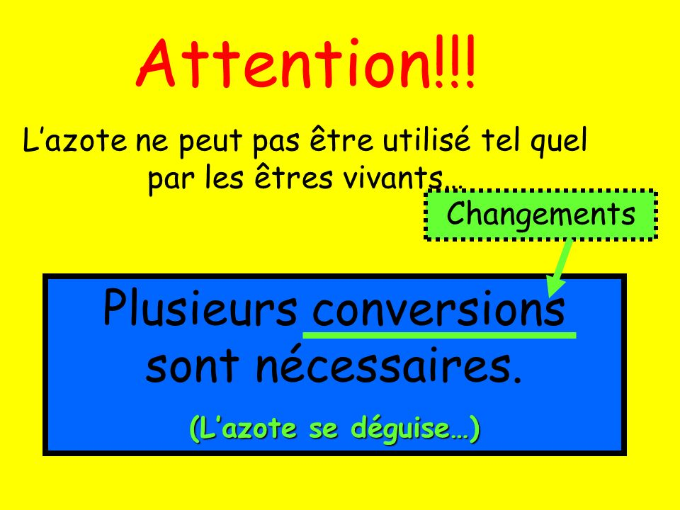 Attention!!! Lazote ne peut pas être utilisé tel quel par les êtres vivants… Plusieurs conversions sont nécessaires. (Lazote se déguise…) Changements