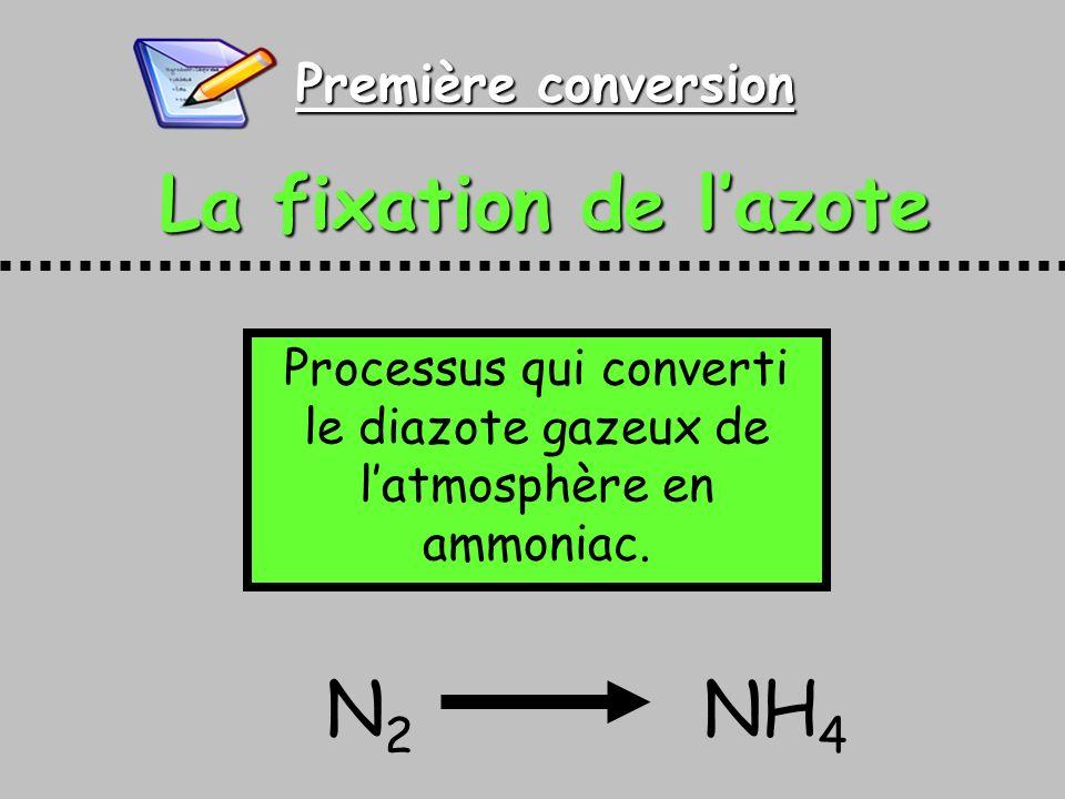 Première conversion La fixation de lazote Processus qui converti le diazote gazeux de latmosphère en ammoniac. N 2 NH 4