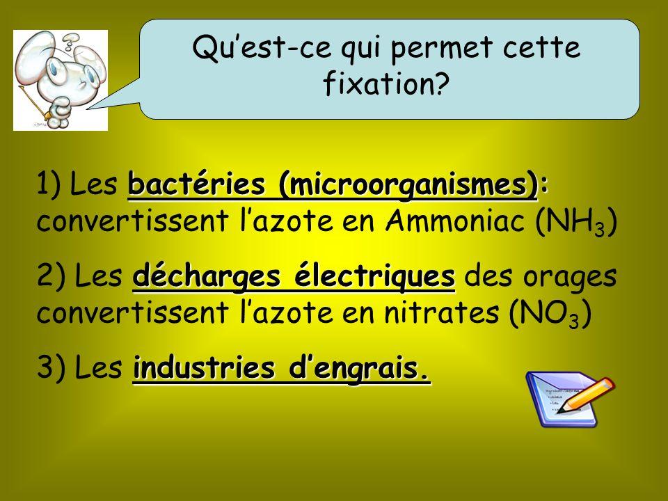 bactéries (microorganismes): 1) Les bactéries (microorganismes): convertissent lazote en Ammoniac (NH 3 ) décharges électriques 2) Les décharges électriques des orages convertissent lazote en nitrates (NO 3 ) industries dengrais.