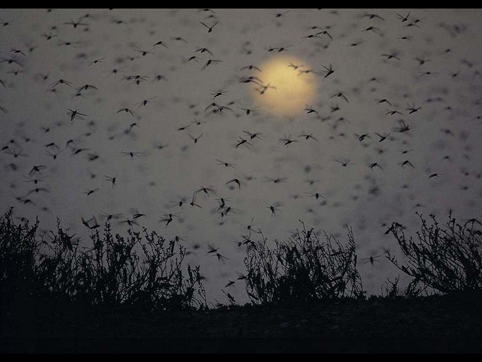 « Lamitié nest pas un soleil, cest une jolie lune qui claire surtout le soir de la vie.