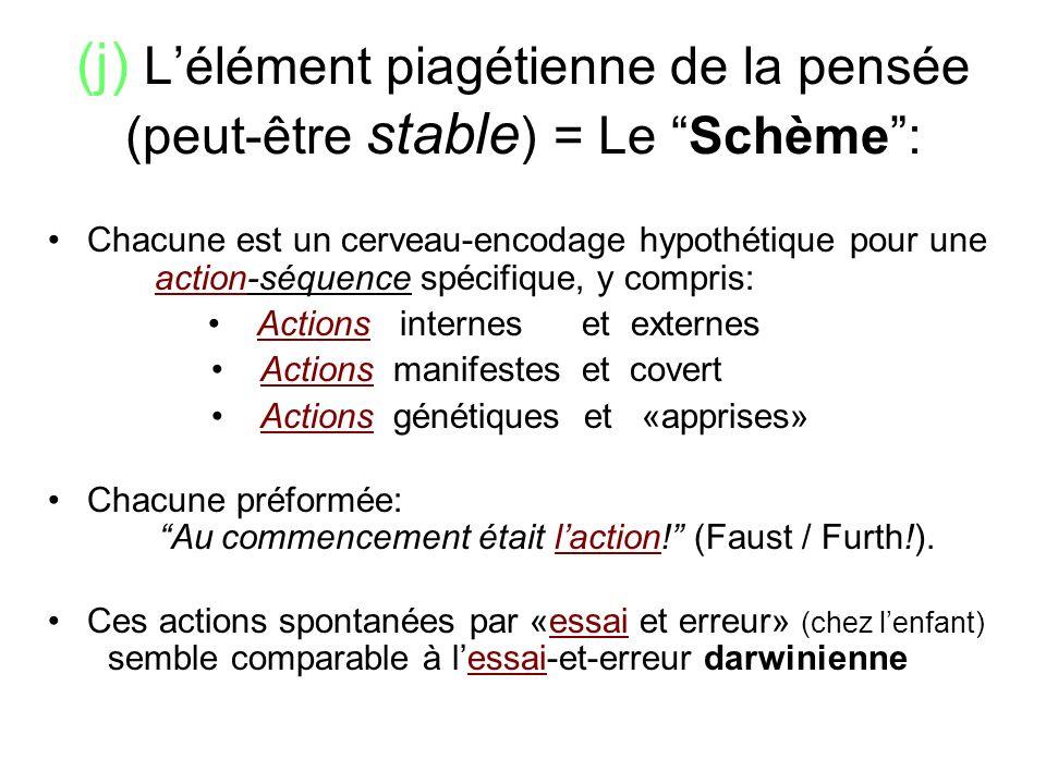 (j) Lélément piagétienne de la pensée (peut-être stable ) = Le Schème: Chacune est un cerveau-encodage hypothétique pour une ___ action-séquence spéci