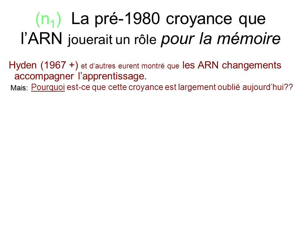 (n 1 ) La pré-1980 croyance que lARN jouerait un rôle pour la mémoire Hyden (1967 +) et dautres eurent montré que les ARN changements accompagner lapp