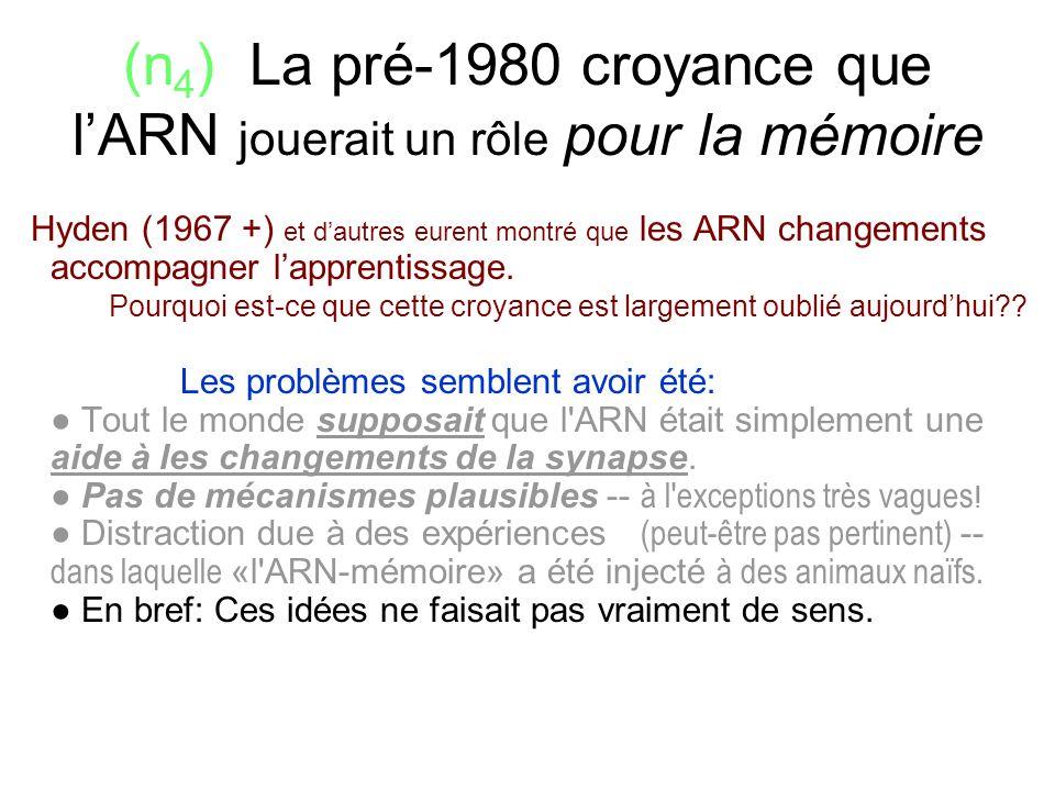(n 4 ) La pré-1980 croyance que lARN jouerait un rôle pour la mémoire Hyden (1967 +) et dautres eurent montré que les ARN changements accompagner lapp