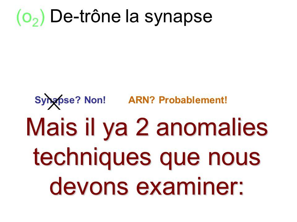 (o 2 ) De-trône la synapse comme l'élément le plus significatif soi- disant --- (de l'intellect au moins) Comme les eléments les plus explicatives pou