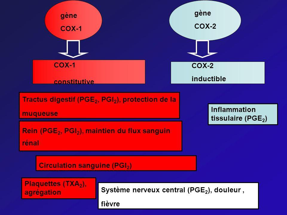 Tractus digestif (PGE 2, PGI 2 ), protection de la muqueuse Rein (PGE 2, PGI 2 ), maintien du flux sanguin rénal Inflammation tissulaire (PGE 2 ) Circ