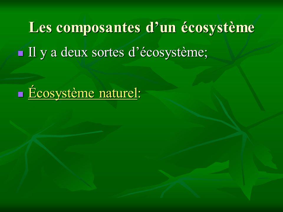 Les composantes dun écosystème Il y a deux sortes décosystème; Il y a deux sortes décosystème; Écosystème naturel: Écosystème naturel: