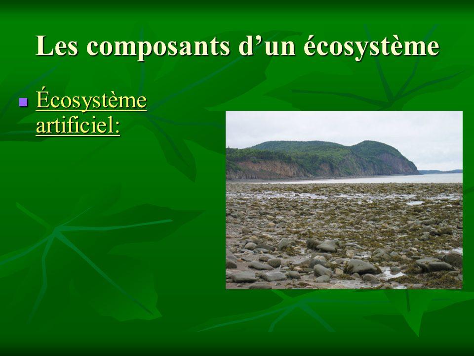 Les composants dun écosystème Écosystème artificiel: Écosystème artificiel: